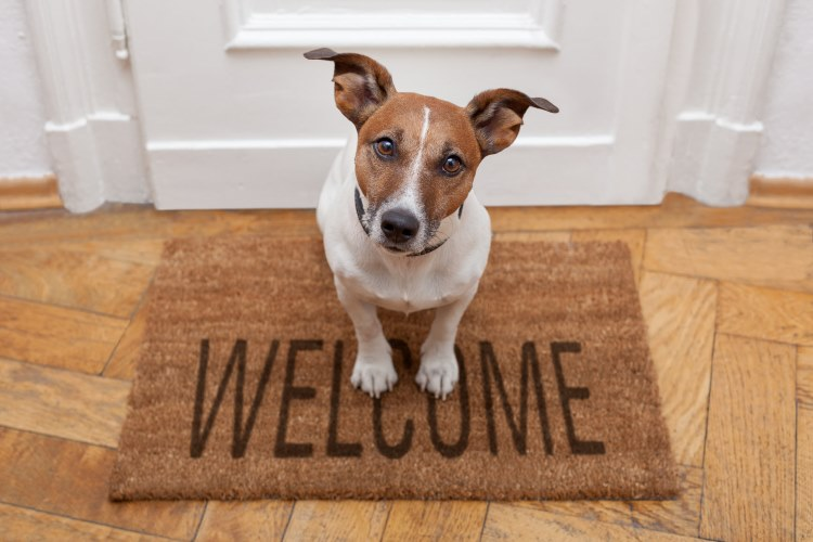 Moving House - Dont Get Stung by an Overpriced Removalist - Remember your pets     designlibrary.com.au